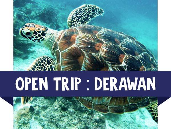 paket wisata open trip derawan